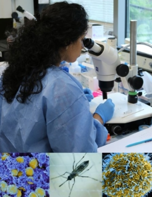 Female scientist wearing latex gloves and blue coat looking into a microscope and affixing slides to the plate. Images below the woman are of cells and insects, denoting what she might be seeing through the microscope.