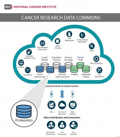 The NCI Cancer Research Data Commons (CRDC) provides biomedical researchers, tool developers, and data scientists with access to data from NCI programs through the nodes like the Proteomics Data Commons. The CRDC allows users to analyze, share, and store results, and is growing to include a wider range of data, including proteomics, imaging, and canine.